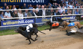 william-hill-greyhounds